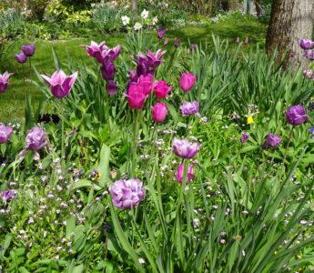 Vackra blommor i Giverny