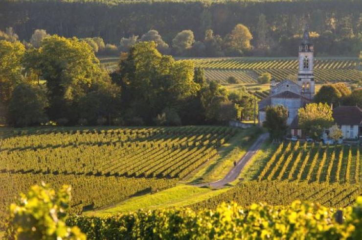 Vinfält St Emilion